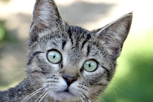 Crazy Cat Coughs up Compo after Attack on Neighbour