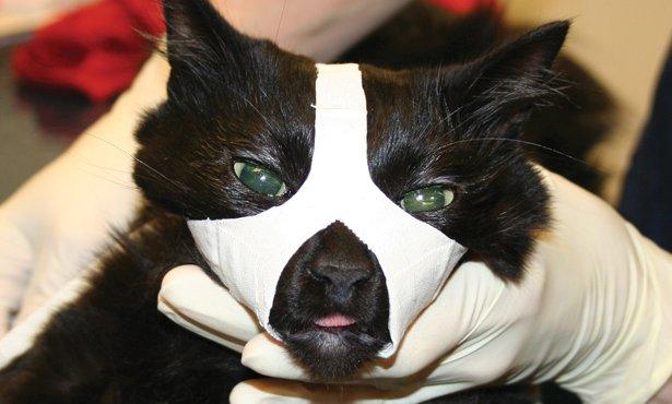 Cat-Muzzle